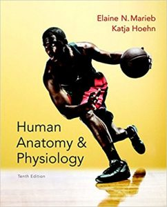 Top 5 Best Anatomy Textbooks - Become A Qualified Medical Student!